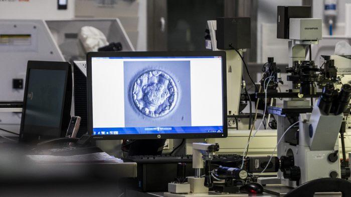 Übertragung des besten Embryos