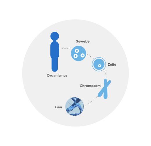 Was sind chromosomale und monogene Veränderungen?