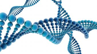 Genetische Präimplantationsdiagnostik (PID)