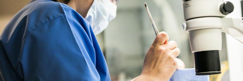 IVI 74 Arbeiten Ergebnisse Erfolg unterstützte Reproduktion