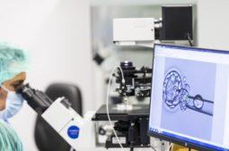 Was ist der Prozess der In-vitro-Fertilisation?