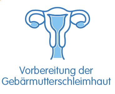 Vorbereitung der Gebärmutterschleimhaut