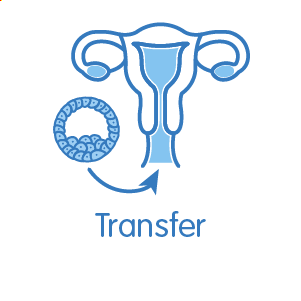 Transfer des besten Embryos